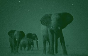 Elephants with Night Vision