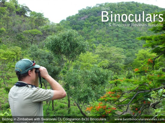 Birdin in Zimbabwe with Swarovski CL Companion 8x30 Binoculars