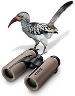 Swarovski CL Companion - perfect Safari Binoculars