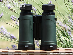 Rear of the Celestron Nature DX 8x42 Binoculars