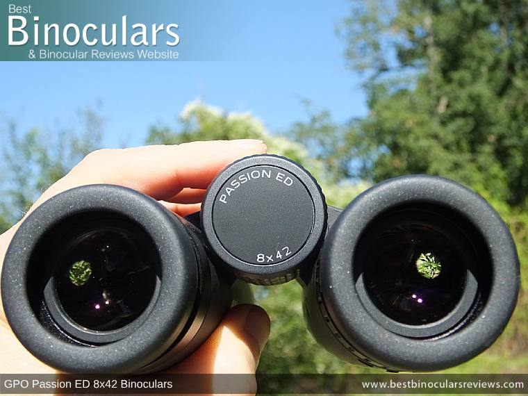 Adjusting the Focus Wheel on the GPO Passion ED 8x42 Binoculars
