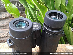 Eyecups on the Hawke Endurance ED 8x32 Binoculars