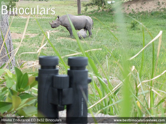 Hawke Endurance ED 8x32 Binoculars on Safari - Viewing Black Rhinos