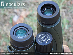 Eyecups on the Hawke Endurance ED 8x42 Binoculars