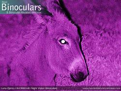 Nighttime Sample Photo - Luna Optics LN-DB60-HD Binocular