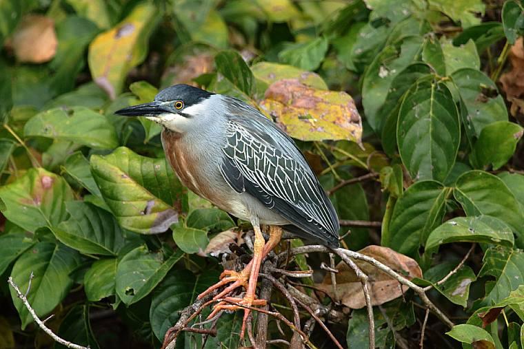 6 best monoculars for bird watching 2019different types of birding