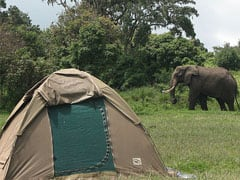 Elephant view: Camping on Safari