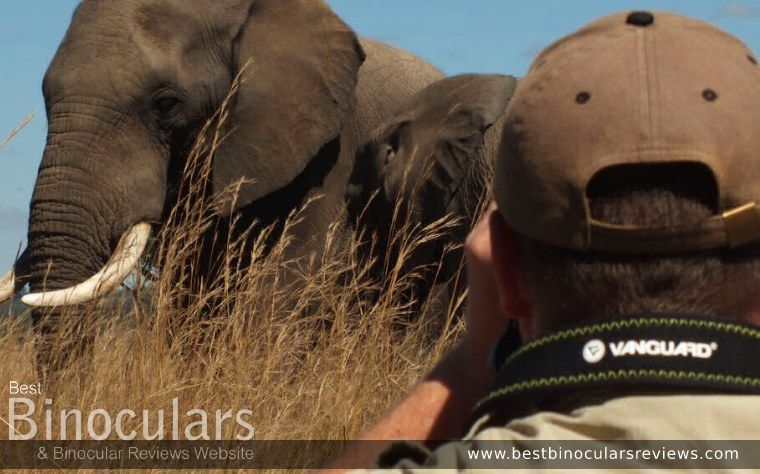 On Safari with the BinoWizard: Viewing elephants with a pair of Vanguard Binoculars